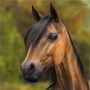 Daz Horse 2